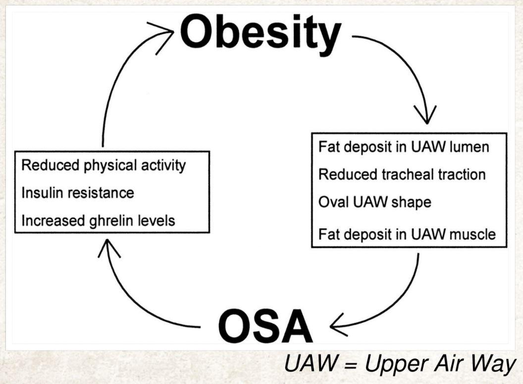 Sleep Apnea and Obesity