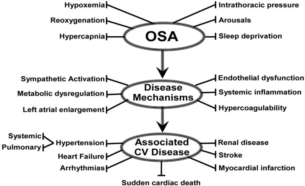 Sleep Apnea damages the heart.