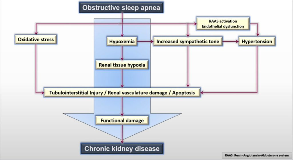 Kidney Disease and Sleep Apnea