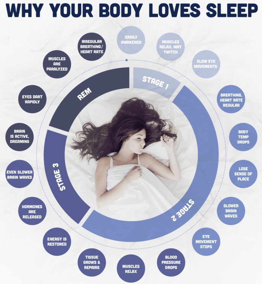 Why you need sleep.